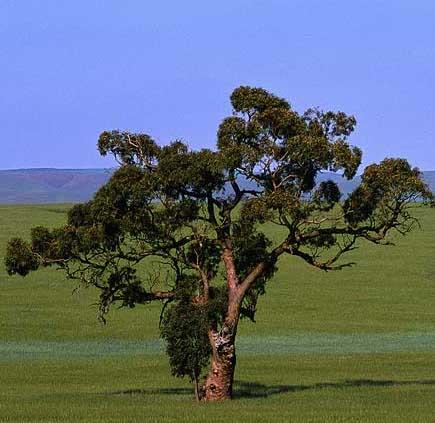 eucalyptus-reed-diffuser-oil.jpg
