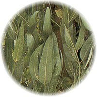 eucalyptus-spearmint-reed-diffuser-oil.jpg