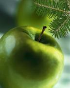 evergreenapple72.jpg