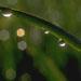 freshcutgrass11.jpg