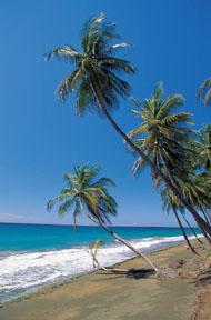 hawaiianbreeze.jpg