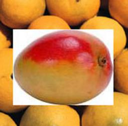 mango-mandarin-reed-diffuser-oil.jpg