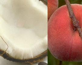 coconutpeaches.jpg