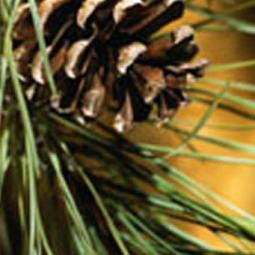 Northwoods Pine Reed Diffuser Oil