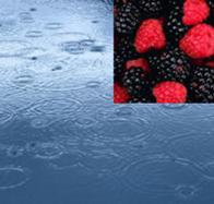 Raspberry Rain Reed Diffuser Oil