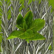Rosemary Mint Reed Diffuser Oil