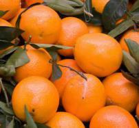 Valencia Orange Reed Diffuser Oil